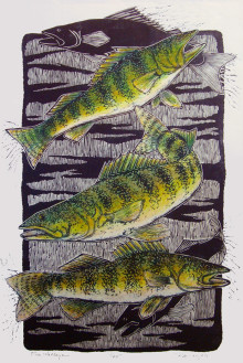 5 Walleye (hand colored)